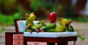 Lovebird frogs