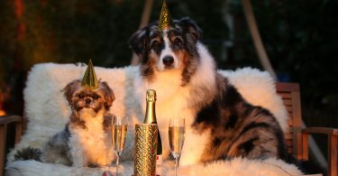 Dogs celebrating New Year's.